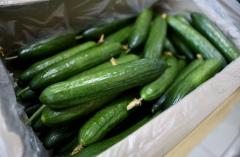 Большую партию овощей поставили в Приморье