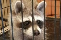 Брошенных животных контактного зоопарка во Владивостоке приютил Океанариум