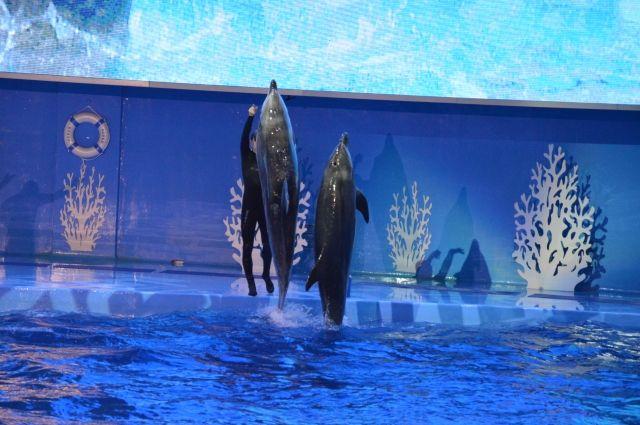 Без шоу, но в масках – океанариум возобновляет работу