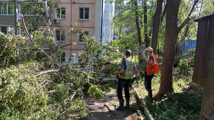 Больше 100 поваленных деревьев вывезено с улиц АГО