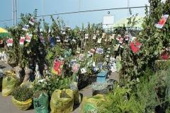 Сезонный посадочный материал для садоводов появился на ярмарках Артёма