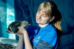 В океанариуме появились на свет редкие пингвины